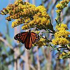 Blue Sky and Butterfly by christiane