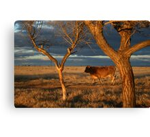 Head'n for bed... Free State, South Africa. Canvas Print