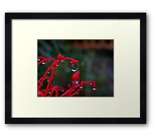 Dew Reflections Framed Print