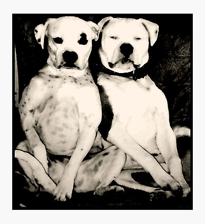 """MODEST DOGS"" Photographic Print"