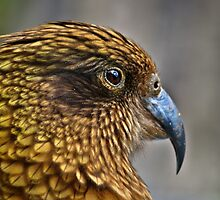 Kea by Wanagi Zable-Andrews