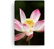 Lotus flower #6 Canvas Print