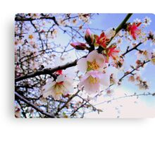 Almond Blossom Canvas Print