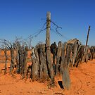 Fence - Mount Wood section, Sturt NP by Jeff Catford