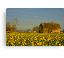 A Morning in the Daffodils Canvas Print