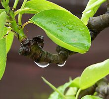 Rain drops on a branch by LoneAngel