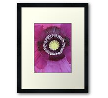 Purple poppy rectangle Framed Print