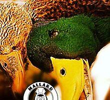 Hen and Drake - Mallard Down by mallarddown