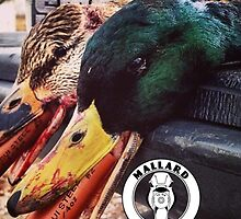 Heavy Shot Mallards - Mallard Down by mallarddown