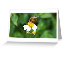 Nature at work Greeting Card