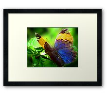 Beauty Inside Framed Print