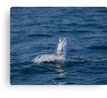 Pacific Sailfish Canvas Print