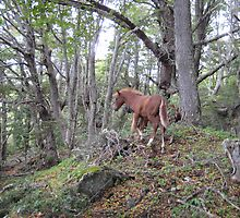 Wild Horse in the Woods by Samantha-Jane  Ince