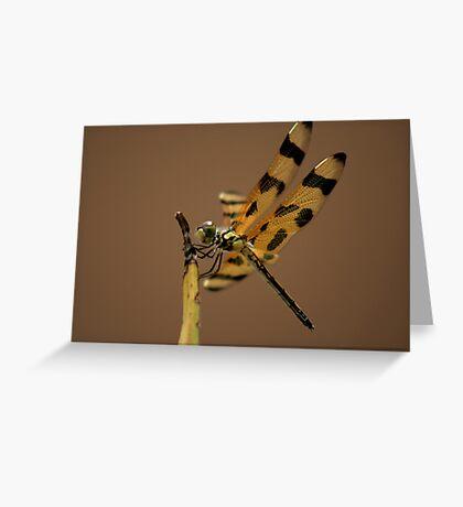 Dragon Fly II Greeting Card