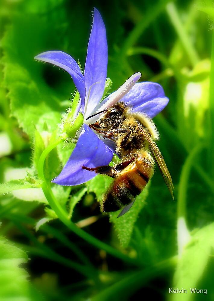 Bee & Flower by Kelvin  Wong