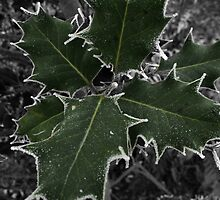 Selective Colour Holly and Frost by mattholmes