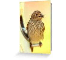 Finch and Warm Colors Greeting Card