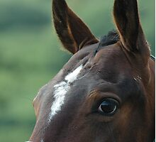 Horse expression detail Photographic Print