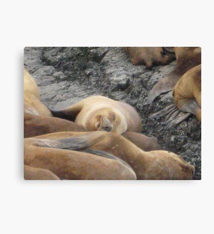 Sleeping Baby Sea Lion Canvas Print