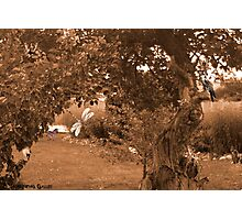 Gathering of Kindred Spirits Photographic Print