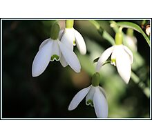 Spring is in the air. Photographic Print