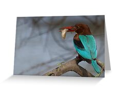 White Breasted Kingfisher Greeting Card