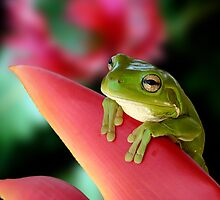 "A Frog's ""Point"" of View by JulieM"