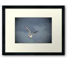 Free as a Bird Framed Print