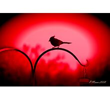 The Color is Red Photographic Print