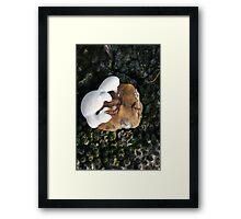 """""""Christmas Pudding"""" Framed Print"""