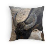 Buffalo Turns His Head Throw Pillow