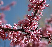 Pink Blossoms by KBdigital