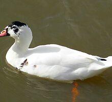 Quack! by Rachael Taylor