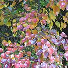 Autumn colours image 36 2008 by bronspst