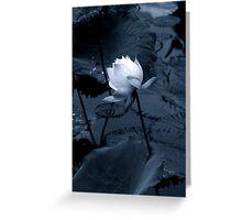 Luminous Lotus Greeting Card