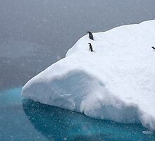 Snow storm, freezing wind ~ Life in the Antarctic goes on!! by Robert Elliott