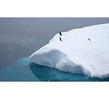 Snow storm, freezing wind ~ Life in the Antarctic goes on!! Photographic Print