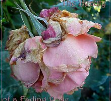 The Beauty of a Faded Rose by margo