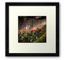 Tulips along a fence Framed Print