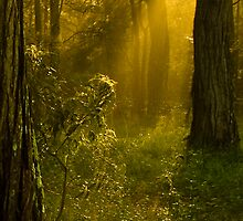 Catching the light by Rosalie Dale