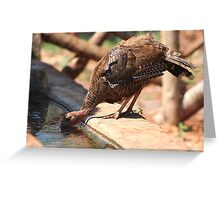Cool turkey Greeting Card