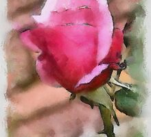 Patio Rose by Kenneth Hoffman
