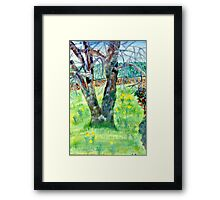 The Old Tulip Tree Framed Print