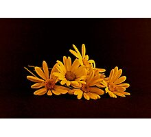 A Bouquet of Yellow Daisies Laying on a Black Background Photographic Print
