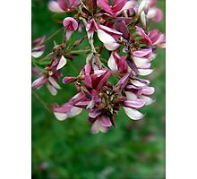 osaka blooms Photographic Print