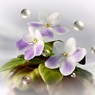 Bubble Violets by Sheryl Kasper