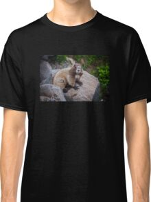 Marmot at Mount Rainier's Myrtle Falls Classic T-Shirt