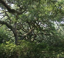 Wild Oaks by John Michael Sudol