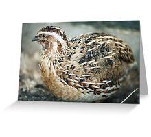 European quail Greeting Card