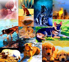 Artwork of Dogs by Nancy Stafford